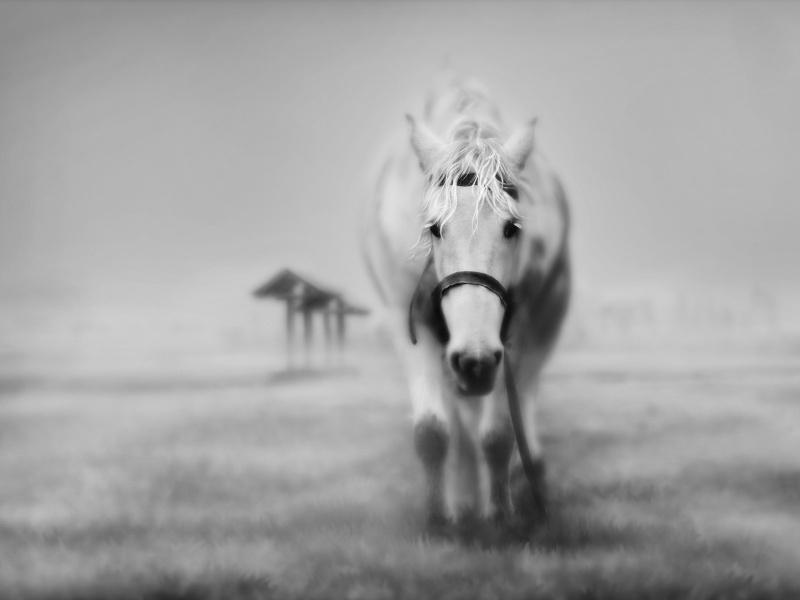 عکس های اسب