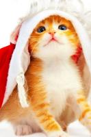 گلچین جدیدترین و بهترین عکس ها برای صفحه ی موبایل