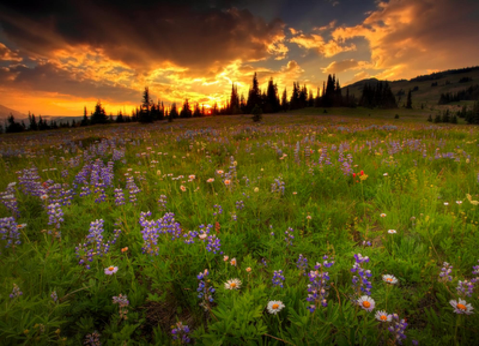 جدیدترین عکس های فوق العاده زیبا از طبیعت
